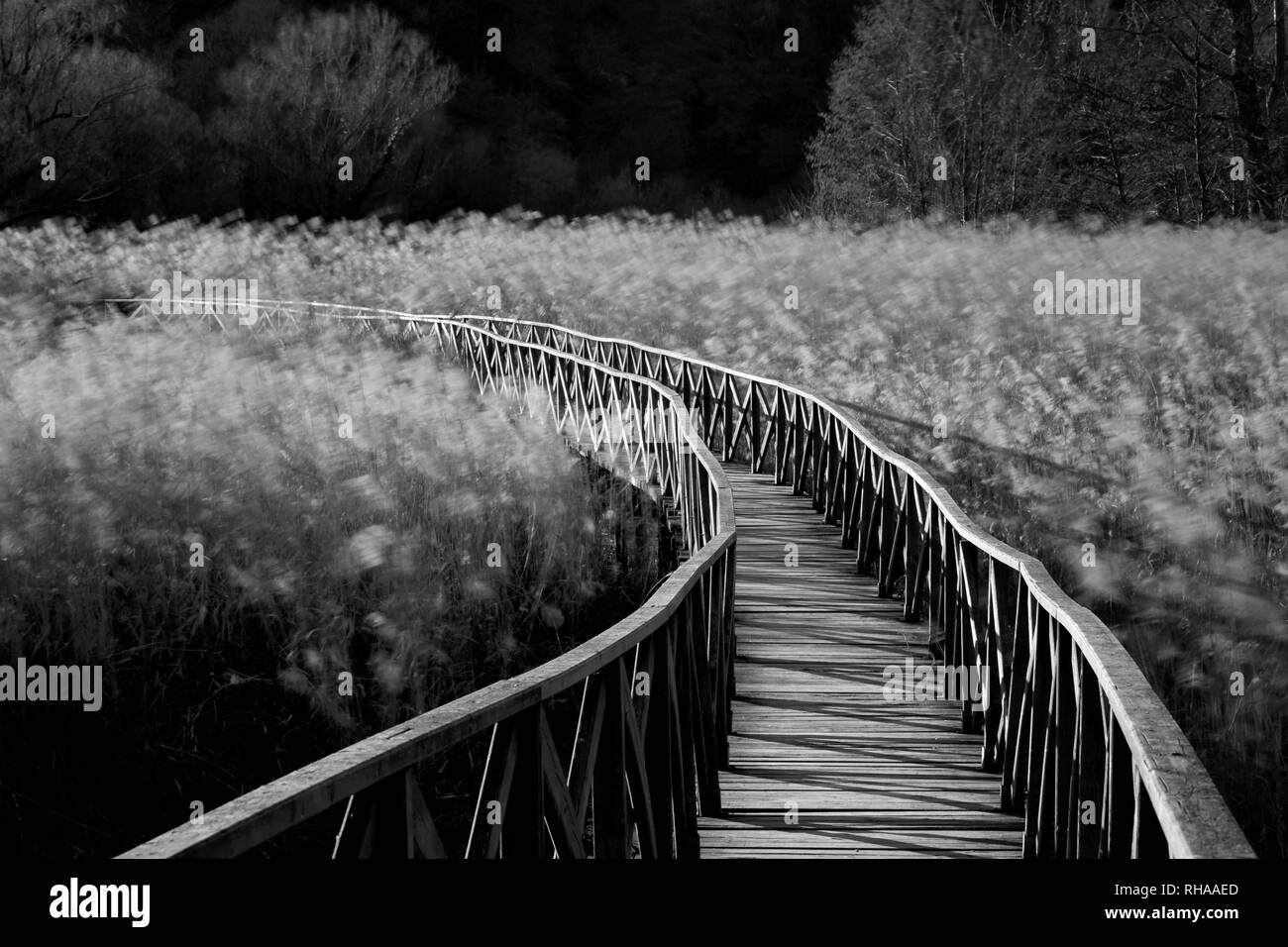 Wooden bridge over wheat country field - Stock Image