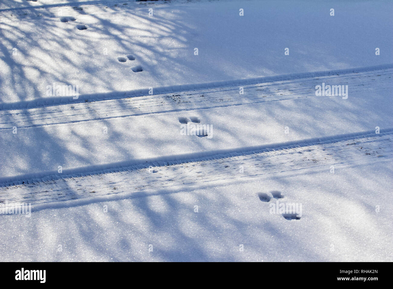 Winter snow texture abstract landscape background featuring rabbit tracks crossing tire tracks in the snow Stock Photo