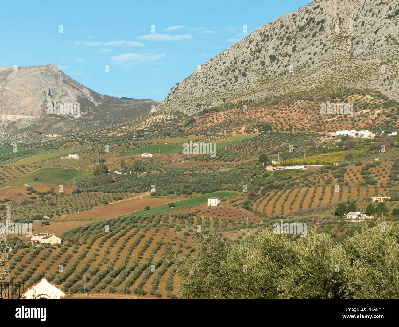 Andalucia in Spain: Cultivated fields of olive, citrus and almond near the village of Valle de Abdalajis - Stock Image
