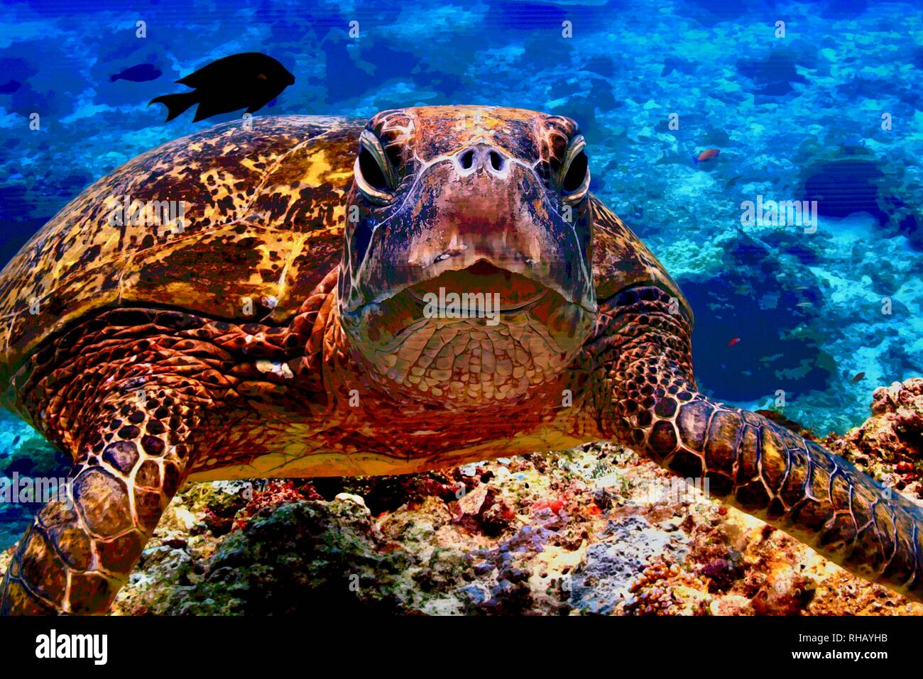 Close up view of sea turtle on Samsung