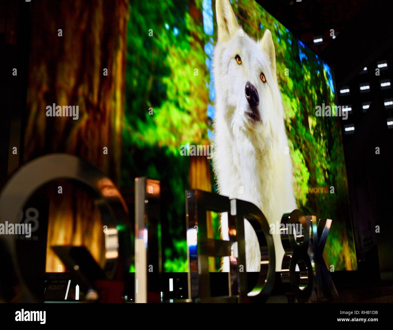 Close up of wolf viewed on Samsung QLED 8K TV (television) in exhibit booth at CES, world's largest consumer electronic show, Las Vegas, NV, USA - Stock Image