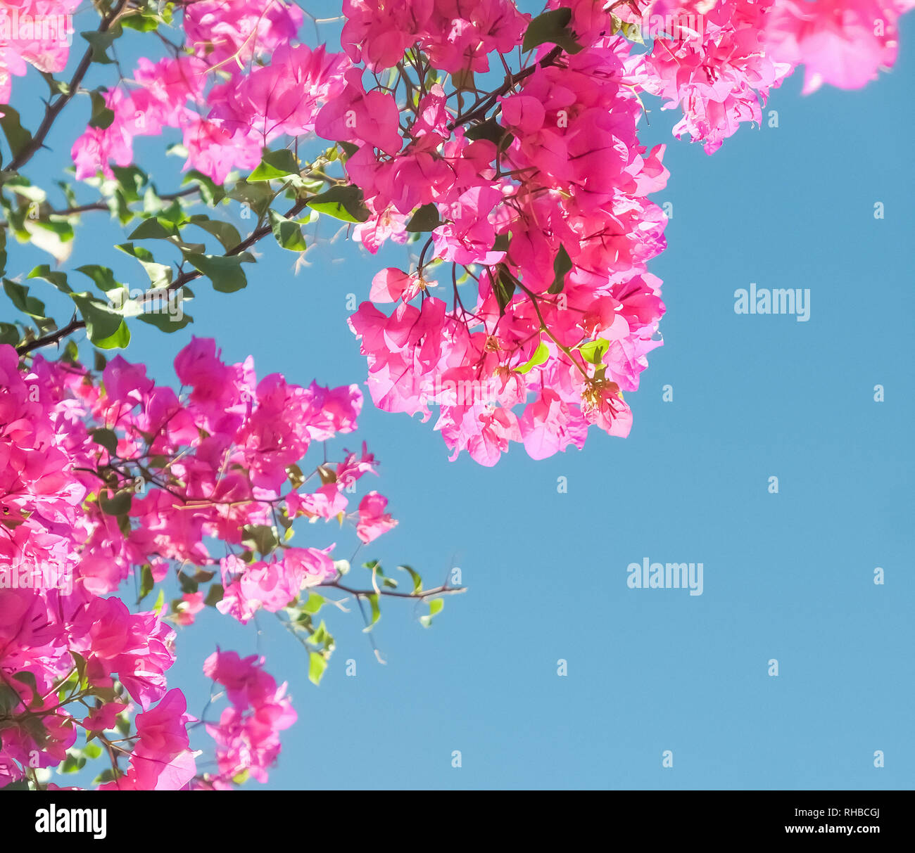 Pink Flowers And Blue Sunny Sky Floral Background Spring Holidays