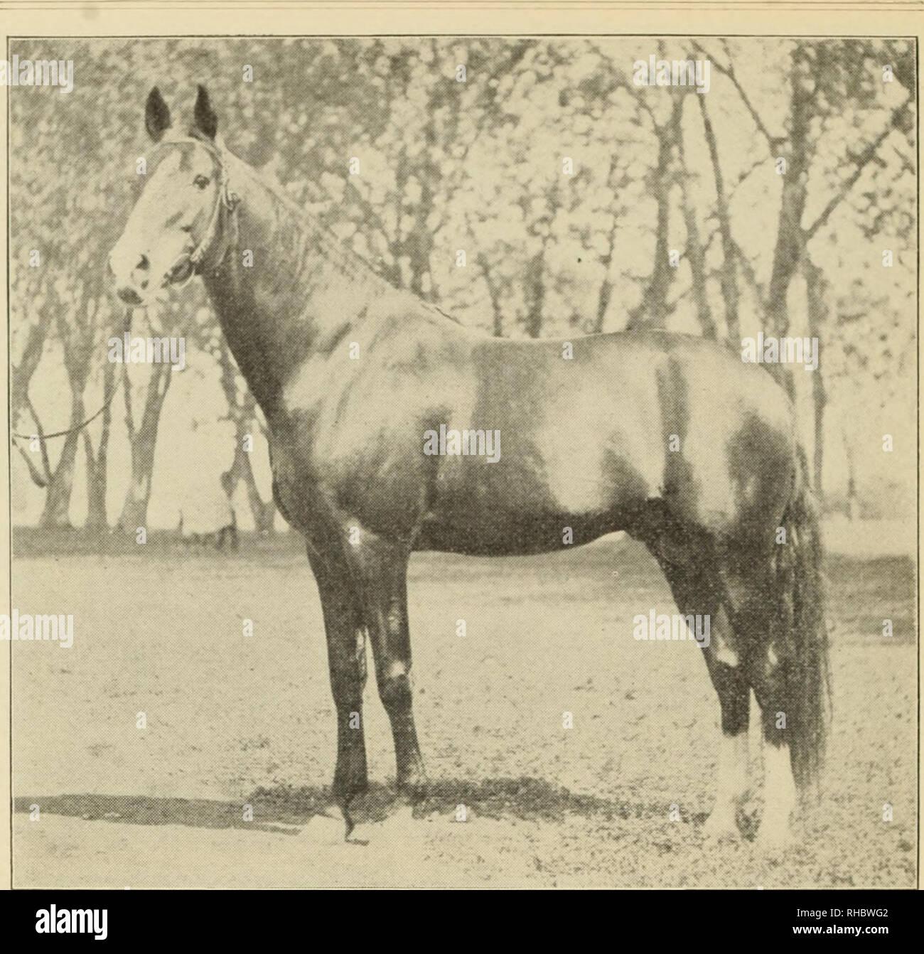 Sticker ANIMAUL horse ref 071