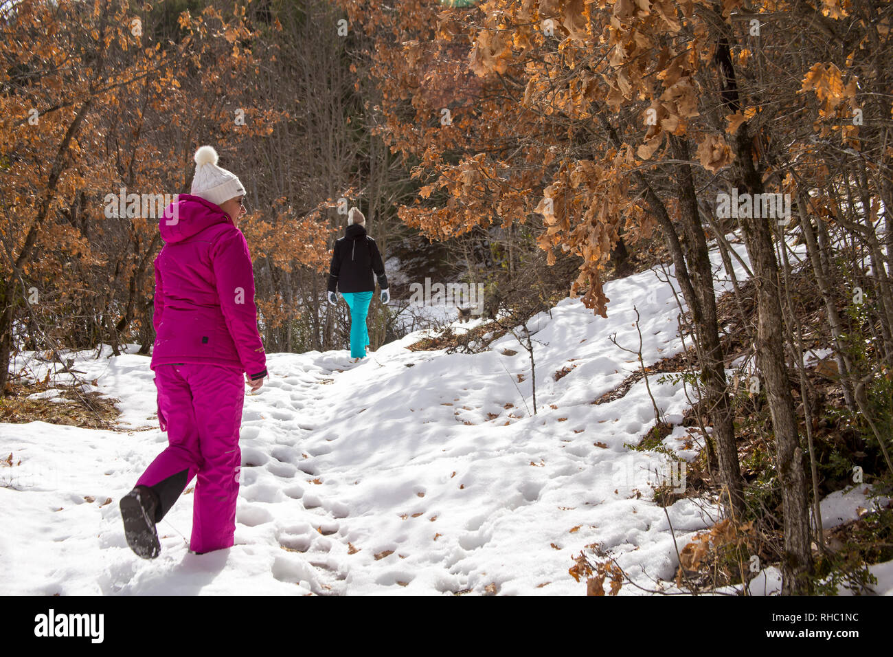 Mom and daughter, dressed in ski suits, are hiking in a snowy winter forest on a sunny day. On the branches of trees, dry yellow leaves are illuminate - Stock Image