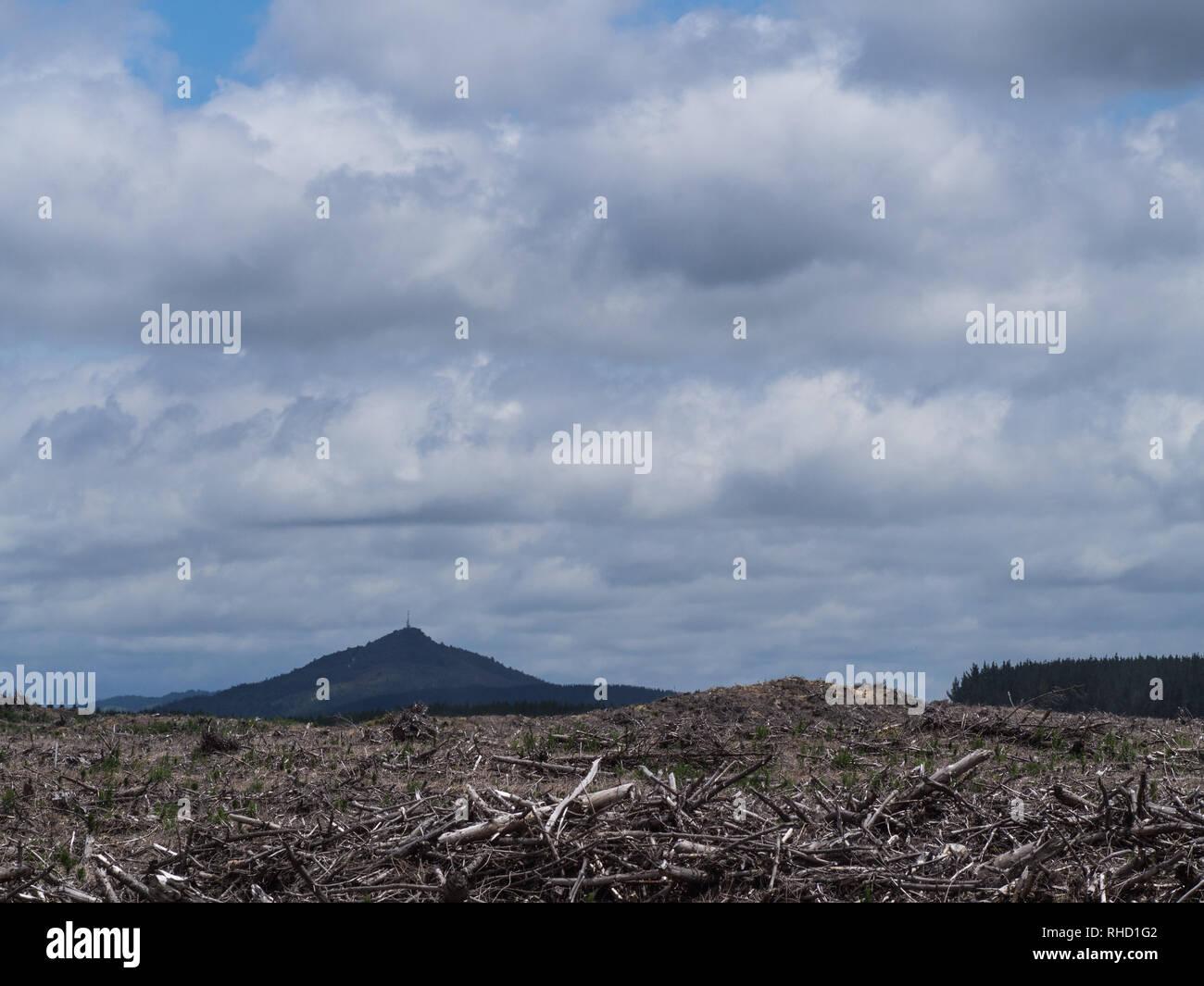 Logging slash, debris left after pine forest has been clear felled, Kaiangaroa Forest, Bay of Plenty, New Zealand - Stock Image