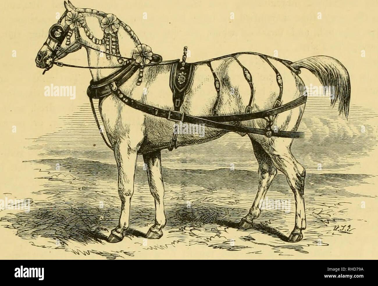 Horse Railroads Stock Photos & Horse Railroads Stock Images
