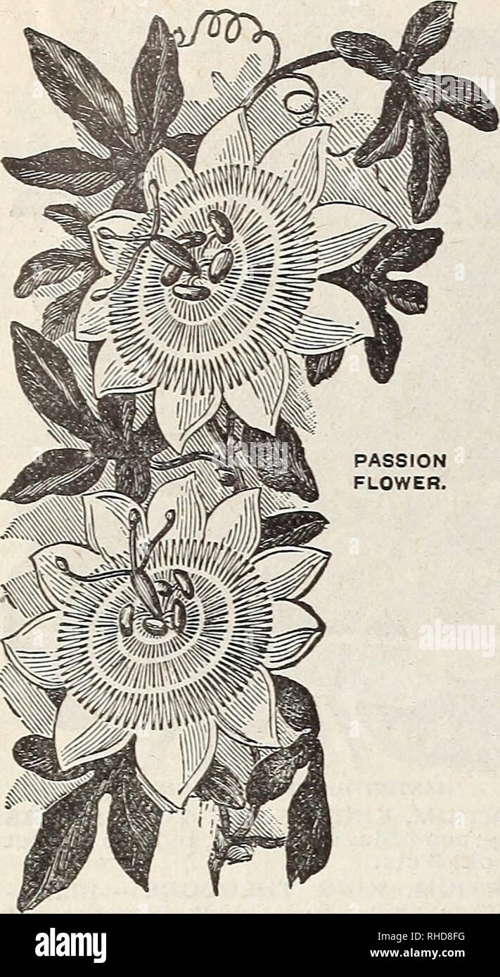 Book of flowers from Miss Martha Hiser, seedswoman and