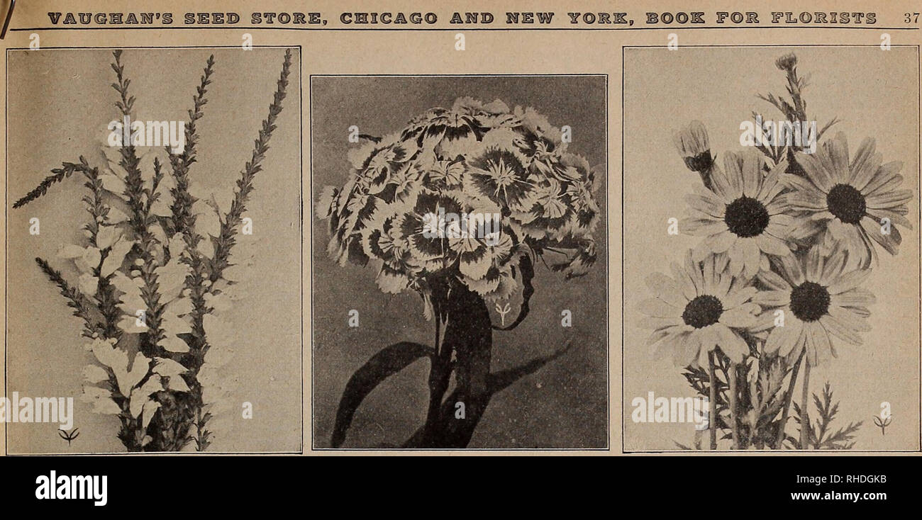 Book for florists  Flowers Seeds Catalogs