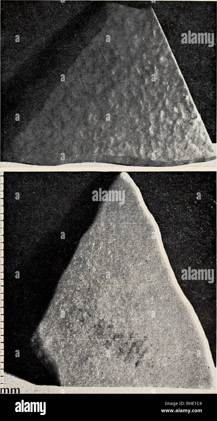 Feuille De Pierre Slate Skin 47 x stock photos & 47 x stock images - page 27 - alamy