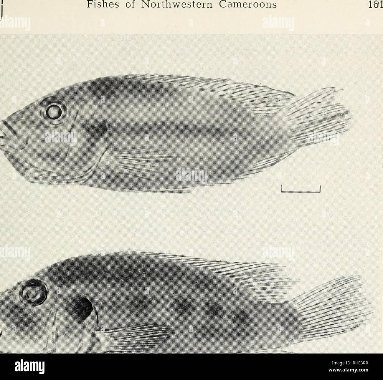Bonner zoologische Beiträge : Herausgeber: Zoologisches