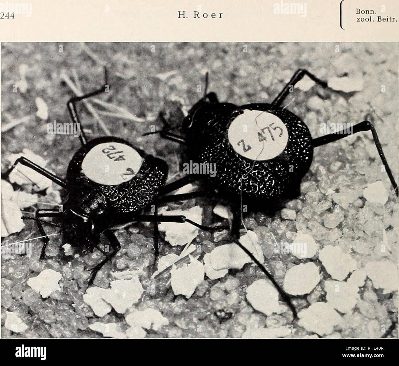 Bonner zoologische beiträge herausgeber zoologisches forschungsinstitut und museum alexander koenig bonn