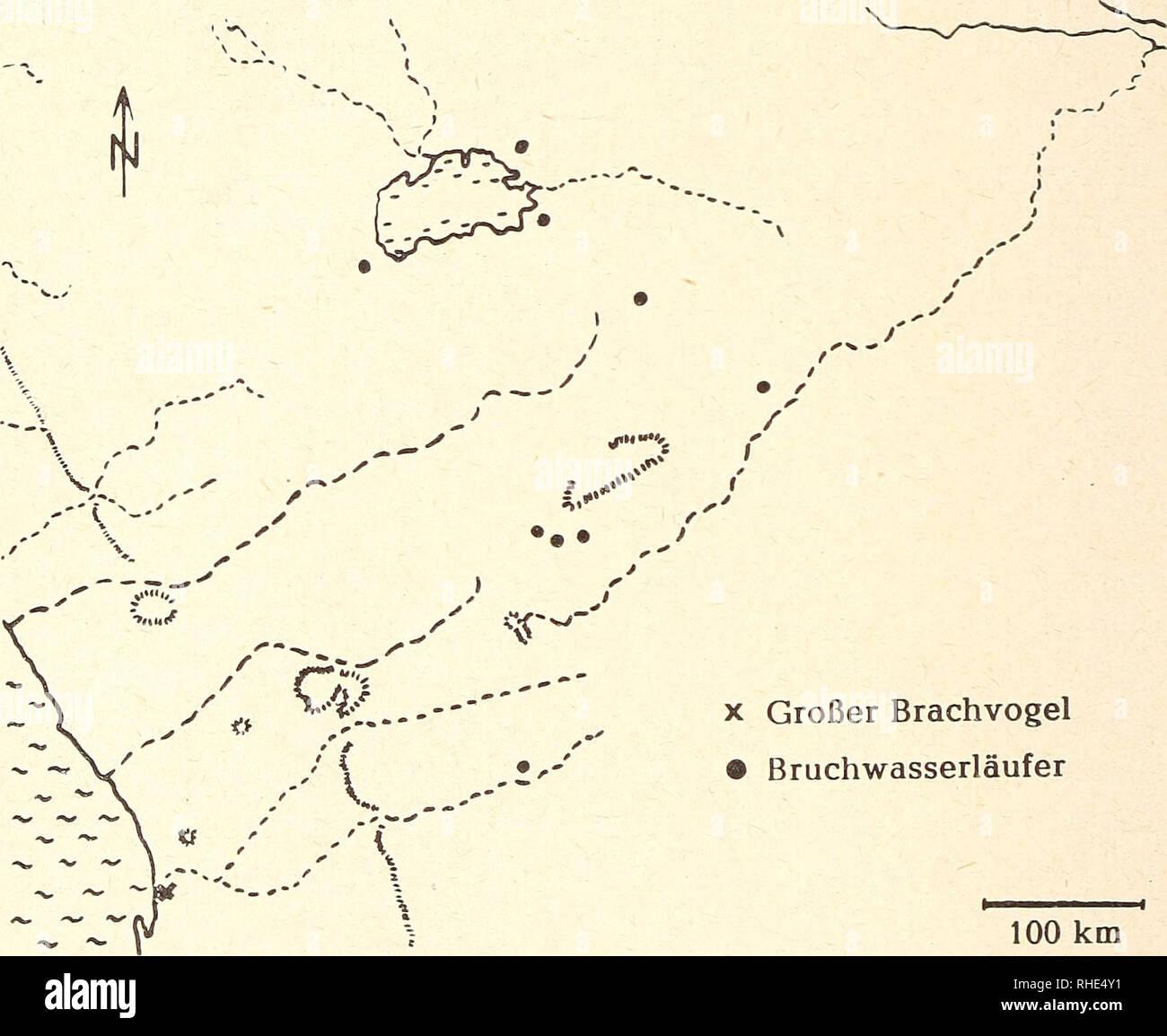 . Bonner zoologische Beiträge : Herausgeber: Zoologisches Forschungsinstitut und Museum Alexander Koenig, Bonn. Biology; Zoology. 54 F. Sauer und E. Sauer Bonn, zool. Beitr. Larö-Limicolae 7. Numenius arquata — Großer Brachvogel, Wurp; Abb. 4 Beobachtungsdaten: Atlantikküste: Am 26. 4. 1958 treffen wir un- gefähr 6 km südlich Swakopmund auf einen Trupp von 5 Tieren. Entlang der Flut- grenze suchen sie im Strandanspül emsig nach Nahrung. Wahrscheinlich waren diese Brachvögel bereits auf dem Rückzug nach N, und möglicherweise blockier- ten der völlig wolkenverhangene Himmel und die Kälte den Zug - Stock Image