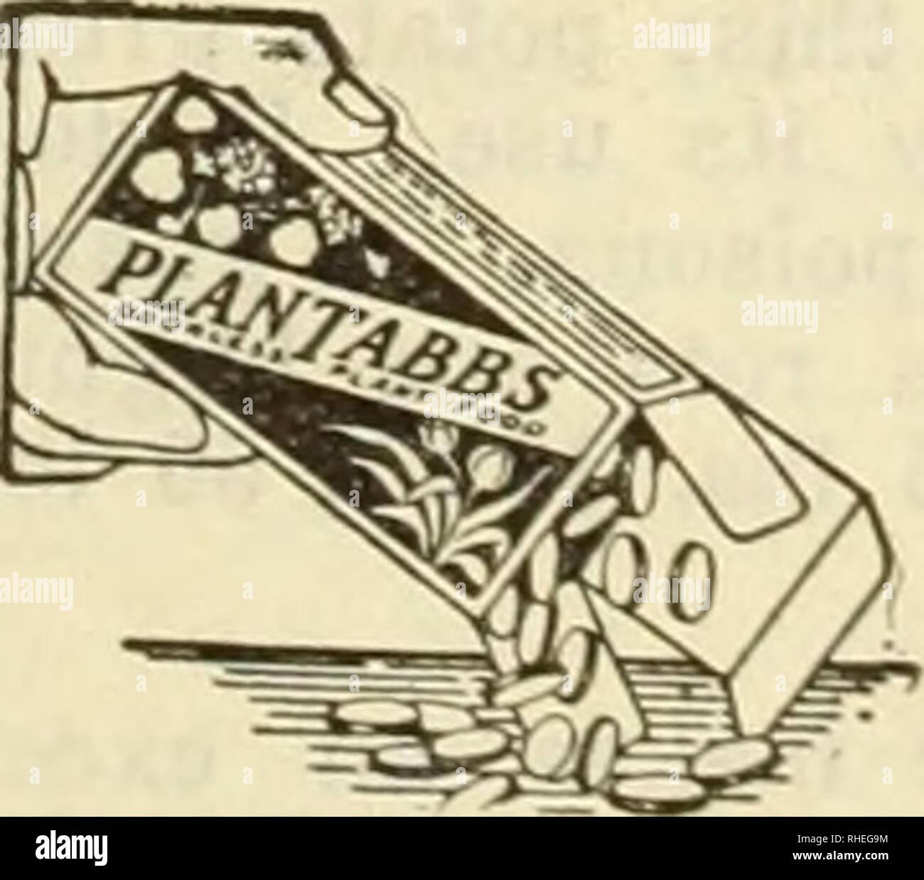 1bc5655398cc . Bolgiano s of Washington   new 1927 introduction the senator tomato.  Nurseries (Horticulture) Catalogs  Bulbs (Plants) Catalogs  Vegetables  Catalogs  ...