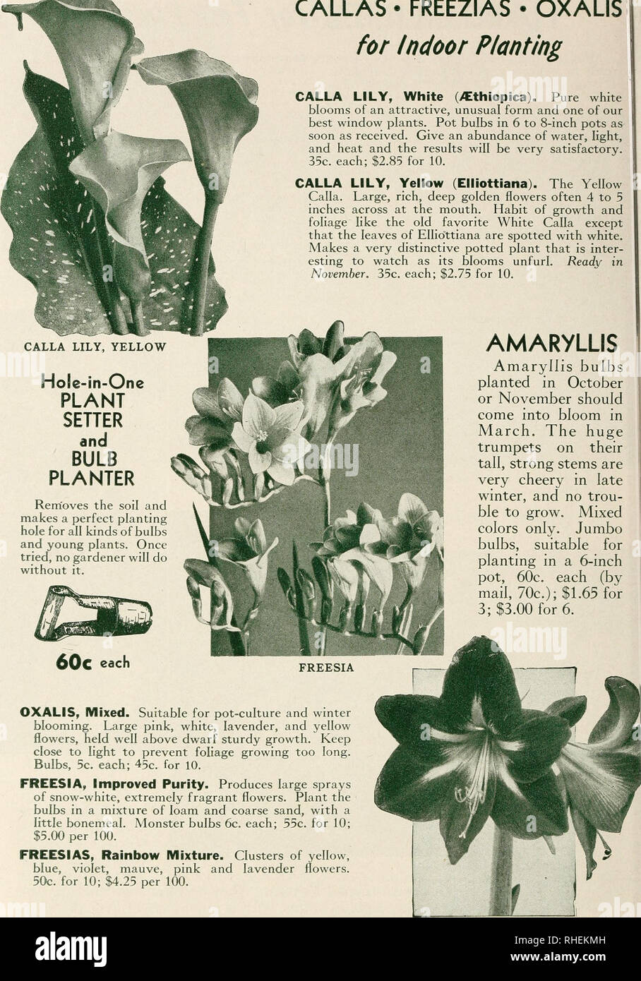 Bolgiano's selected bulbs plants seeds for 1943 fall planting