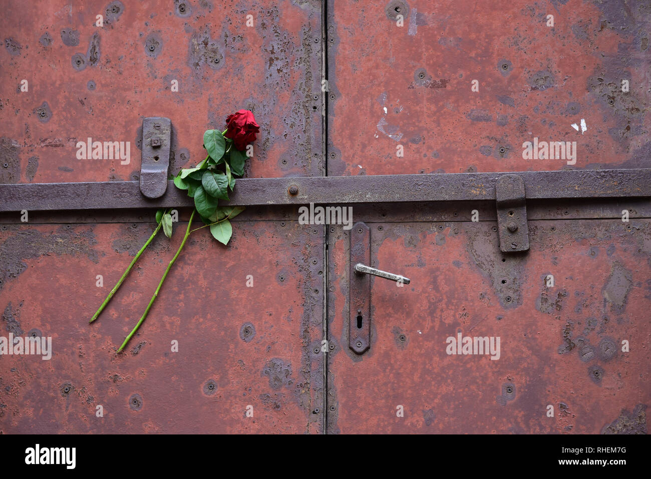 A rose tribute on the doors of 'Block 10', used for prisoner experimentation by German doctors, Auschwitz Concentration Camp, Poland, Europe. - Stock Image