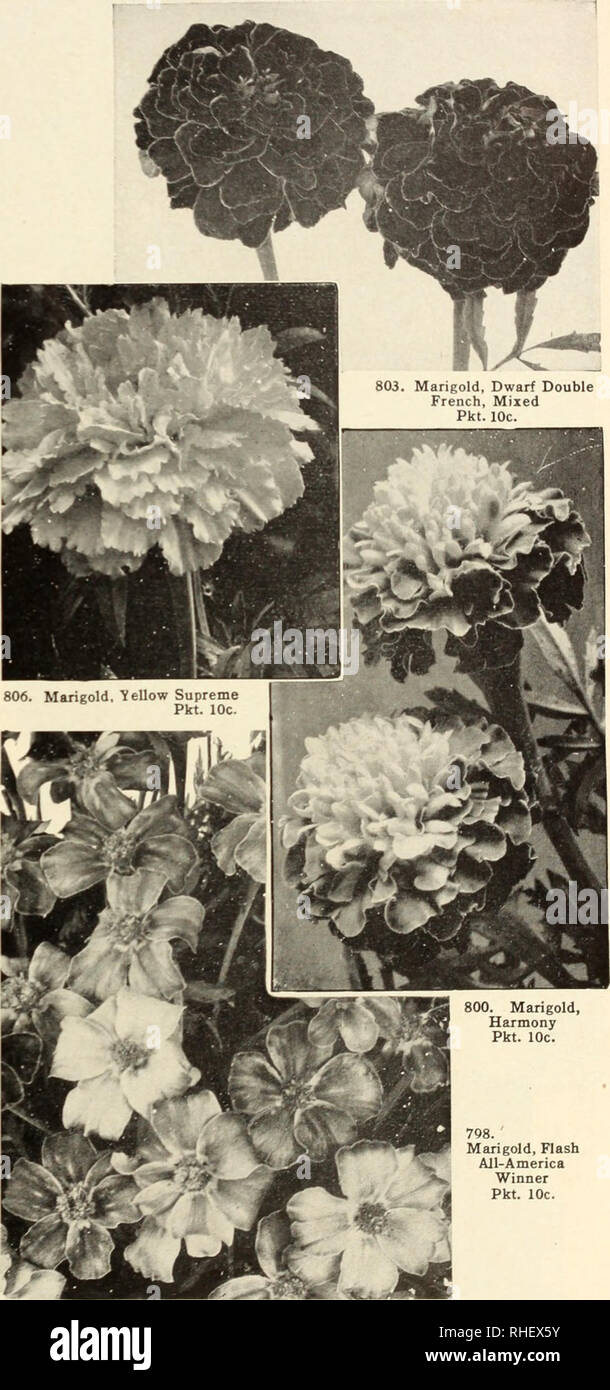 Bolgianos Capitol City Seeds 1889 1950 Nurseries Horticulture