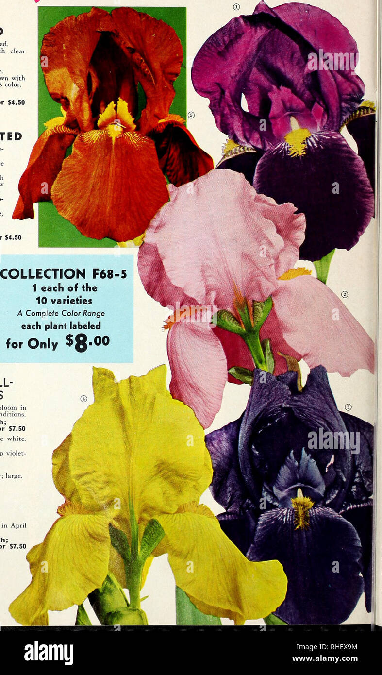 Bolgiano's fall 1968  Nurseries (Horticulture) Catalogs