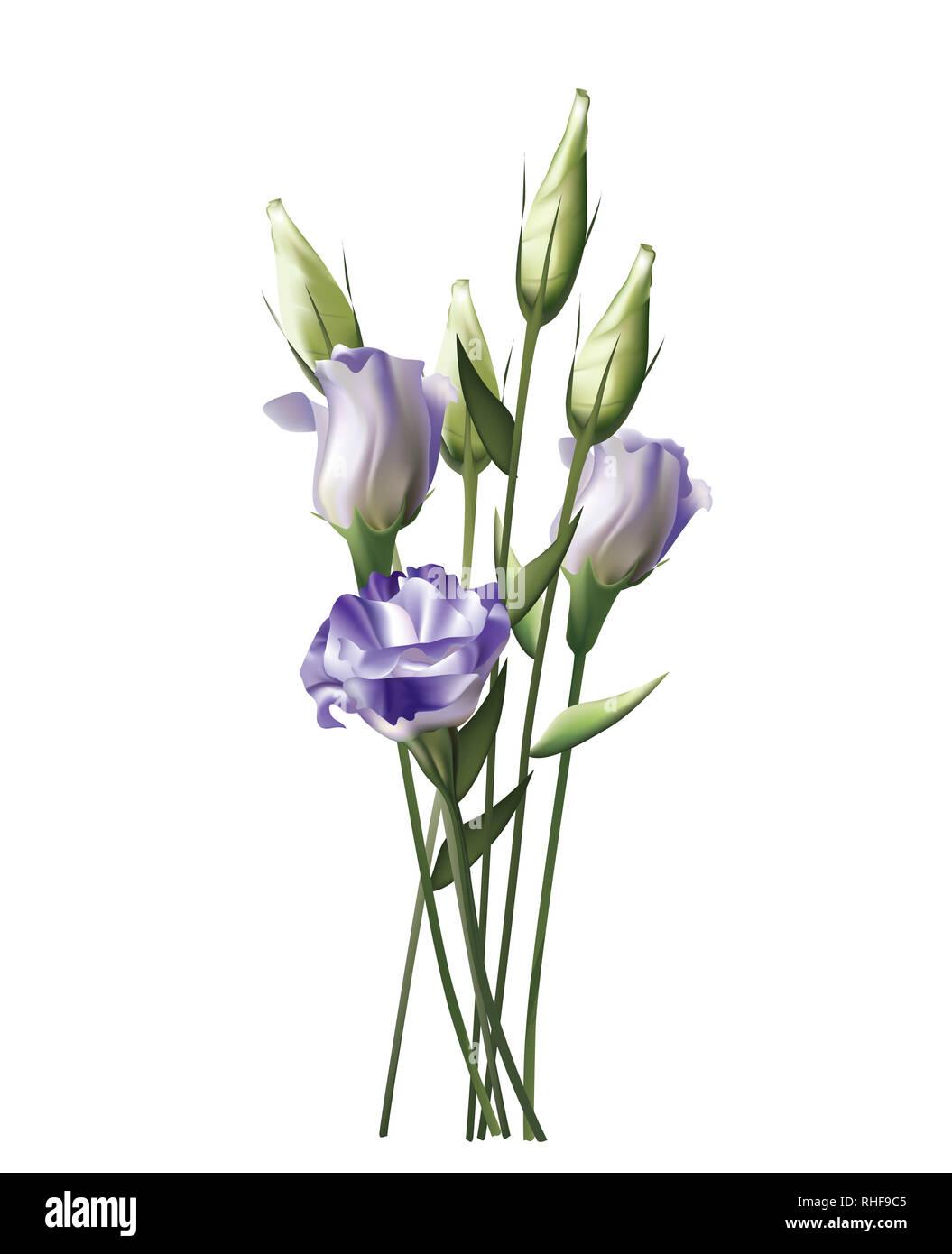 Beautiful sweet lilac Lisianthus on white background - Stock Image