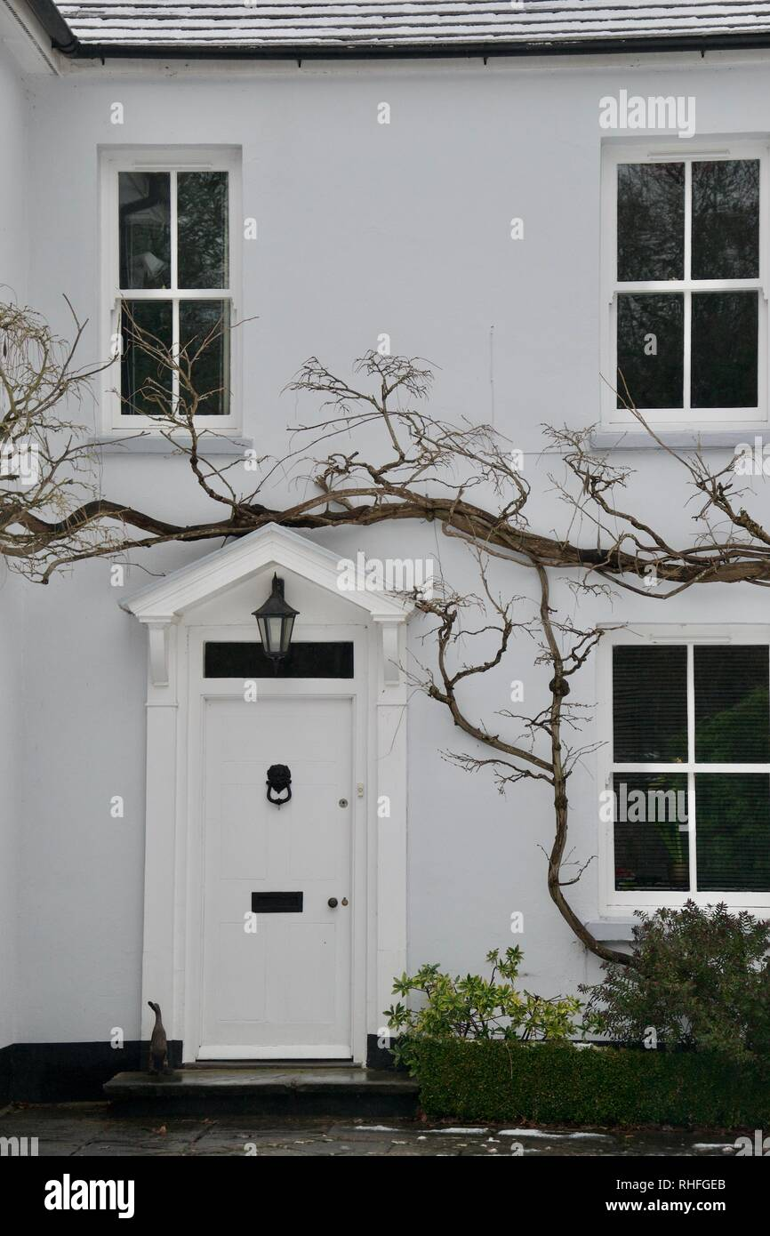 Porch, front door, flower bed, windows and a bare, leafless winter creeper / wisteria / vine. The front of a lovely large white English house in winte - Stock Image