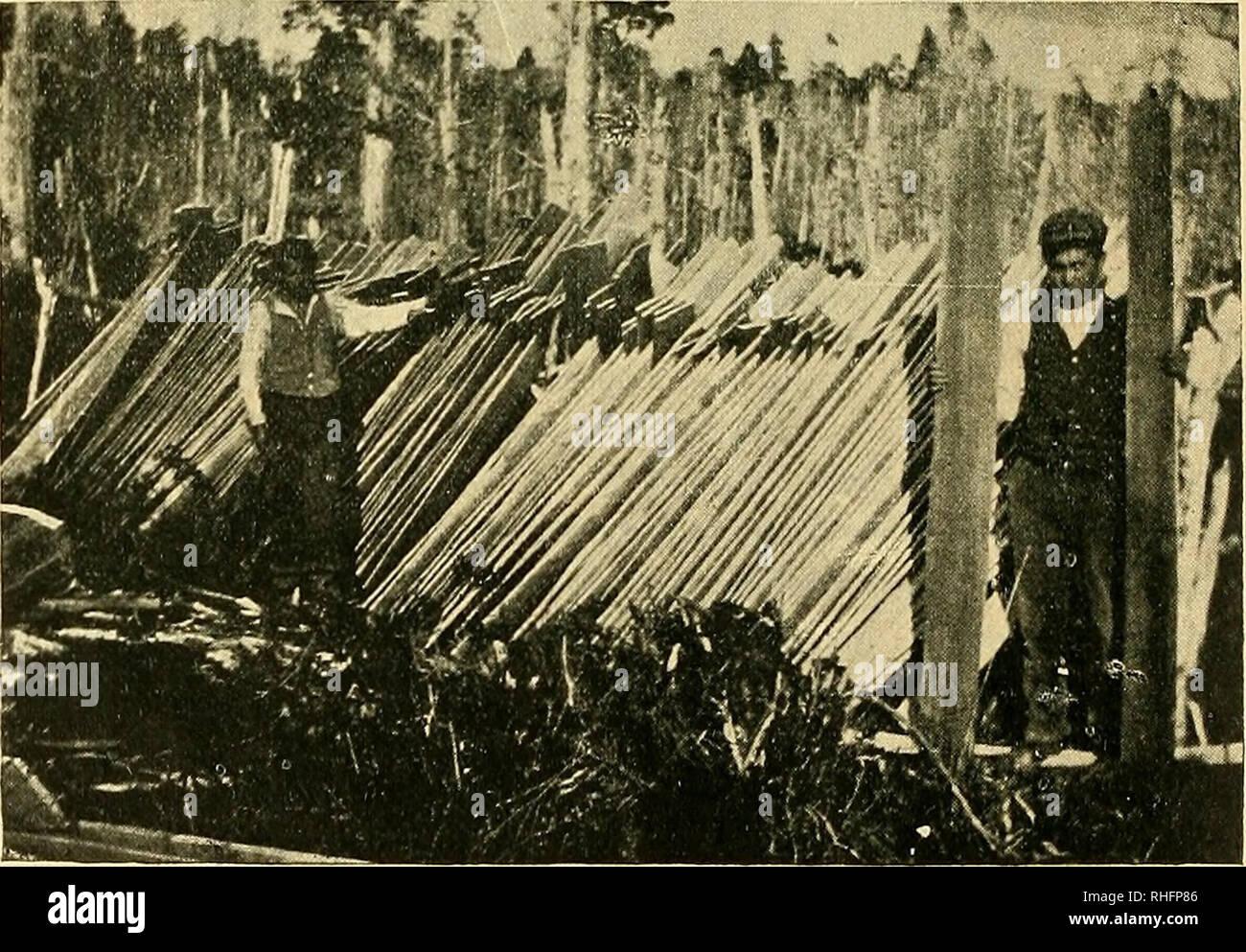 . Boletín del Museo Nacional de Chile. Natural history. FlG. 37.—Estopa de alerce en haces como se baja de los alerzales. La estraccioii de la estopa ocupa a hombres, mujeres i niños, que en grupos i a pié se dirijen a la selva a despojar al alerce de su codiciada en-. FlG. 38.—Colocación de las tablas de alerce en los alerzales.. Please note that these images are extracted from scanned page images that may have been digitally enhanced for readability - coloration and appearance of these illustrations may not perfectly resemble the original work.. Museo Nacional de Chile. Santiago de Chile : M - Stock Image