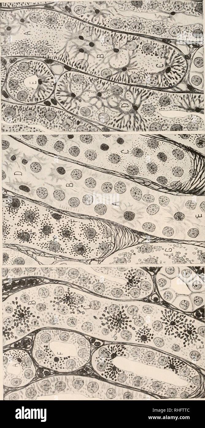ee1425b408 . BoletÃ-n de la Sociedad Española de Historia Natural. Natural history.  Bol. delaR. Soc Esp. deHist. Nat