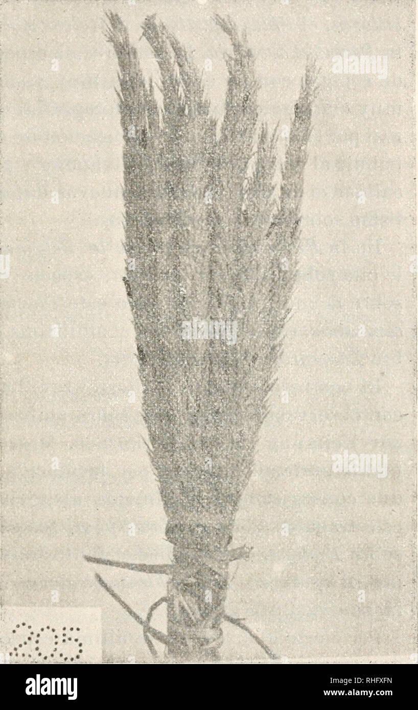""". Boletín de la Sociedad Española de Historia Natural. Natural history. DE HISTORIA NATURAL. 21 í> variable en long-itud, aunque rara vez excede de unos 10 mm., y.más constante en la anchura, pues su diámetro es siempre menor de 1 mm. y á veces sólo Ueg-a á la mitad de este g-rosor. Generalmente es un poco curvo, pero nunca demasiado ar- queado. La super- ficie es parda muy obscura, casi ne- g-ra, mate, alg-o ru- g'osa en sentido de la long-itud, pero sin presentar sur- co long-itudinal. La sección es alg""""o po- ligonal é irregular en seco, pero en fresco la forma es cilindroidea y alg- - Stock Image"""