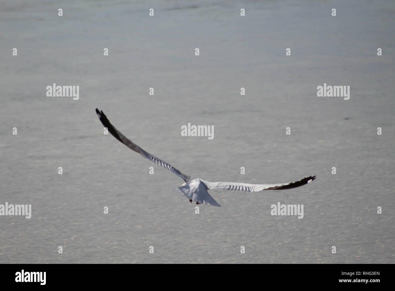 Birds on the Colorado River - Stock Image