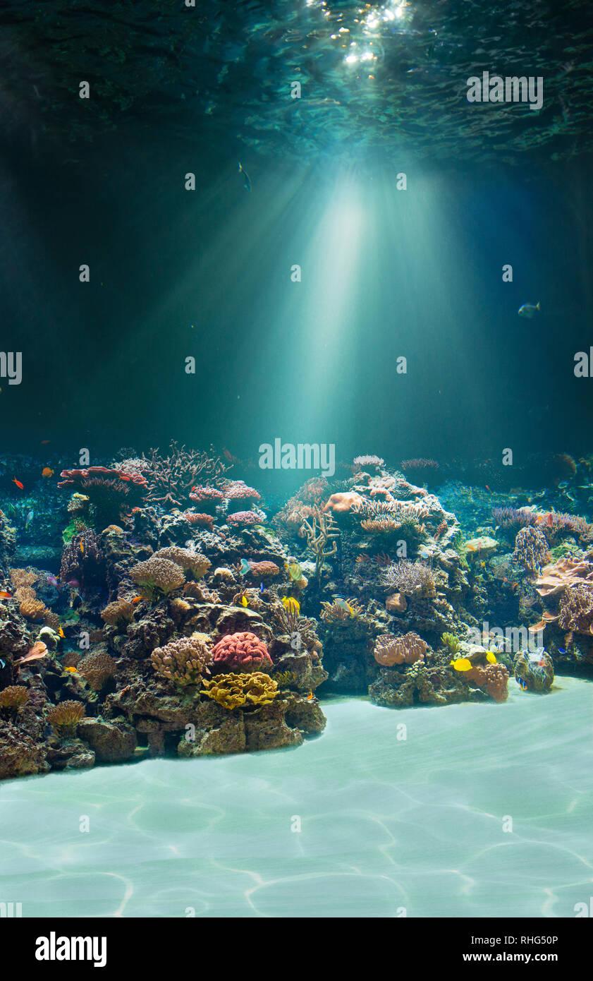 Sea or ocean underwater seabed - Stock Image