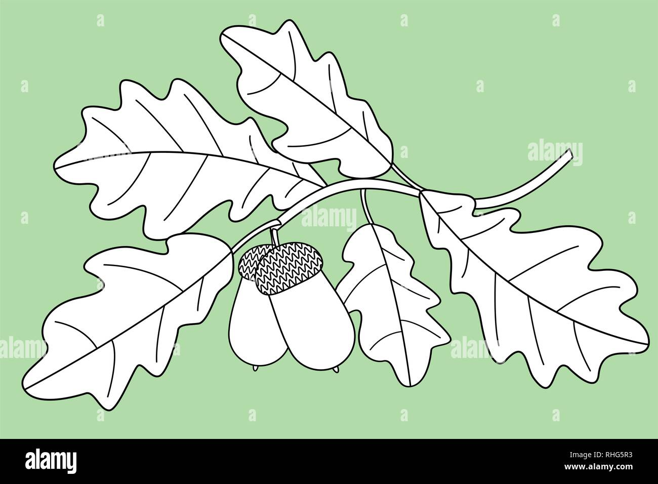 Illustration of the contour oak twig - Stock Vector