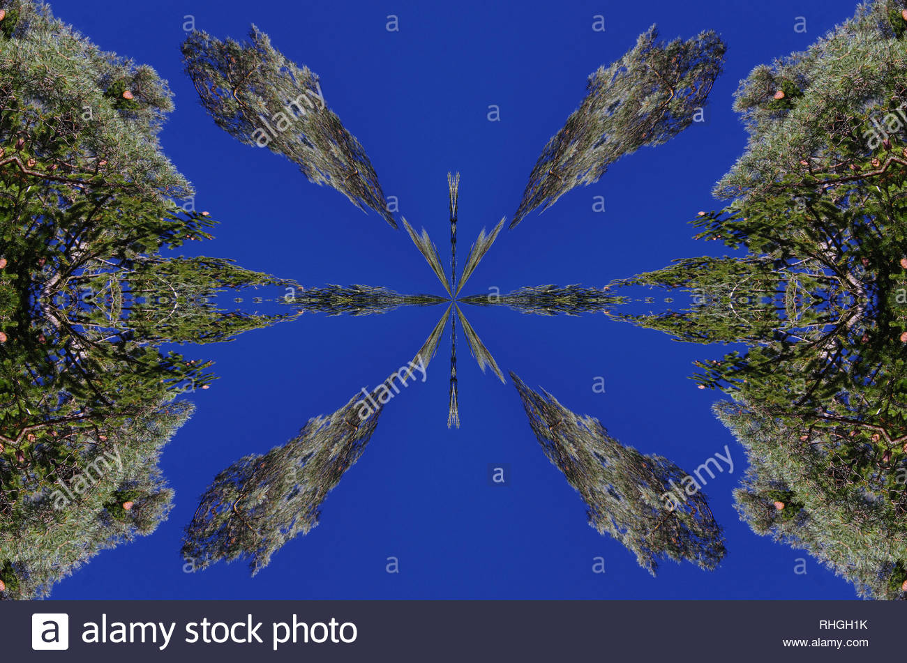 Forests In The Kaleidoscope Changed And Transformed The Objects