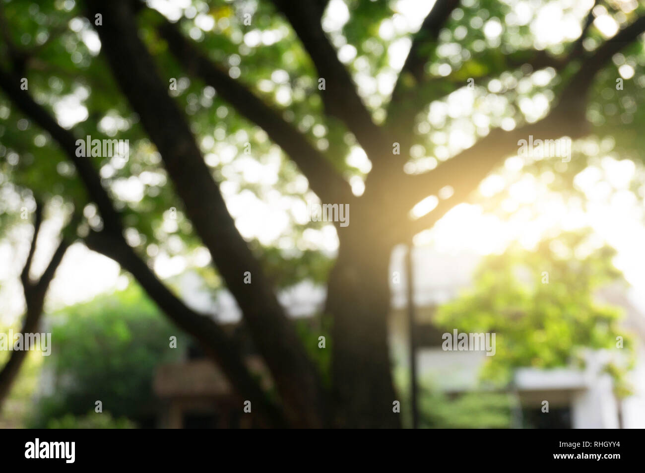 Blurred beautiful nature background blurry of leaf bokeh forest. for background usage . - Stock Image