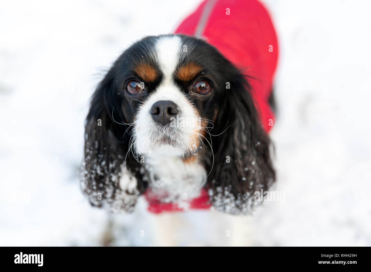 Cute dog on the snow, winter background Stock Photo