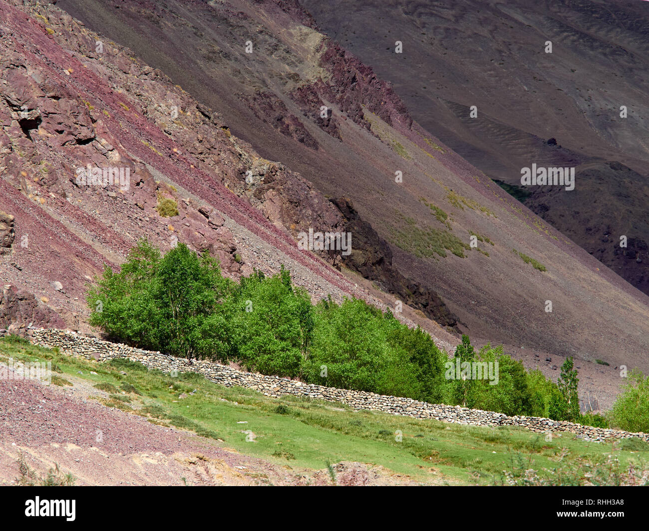 Green bushes on the background of the red slope of the rocks, green on red. Stock Photo