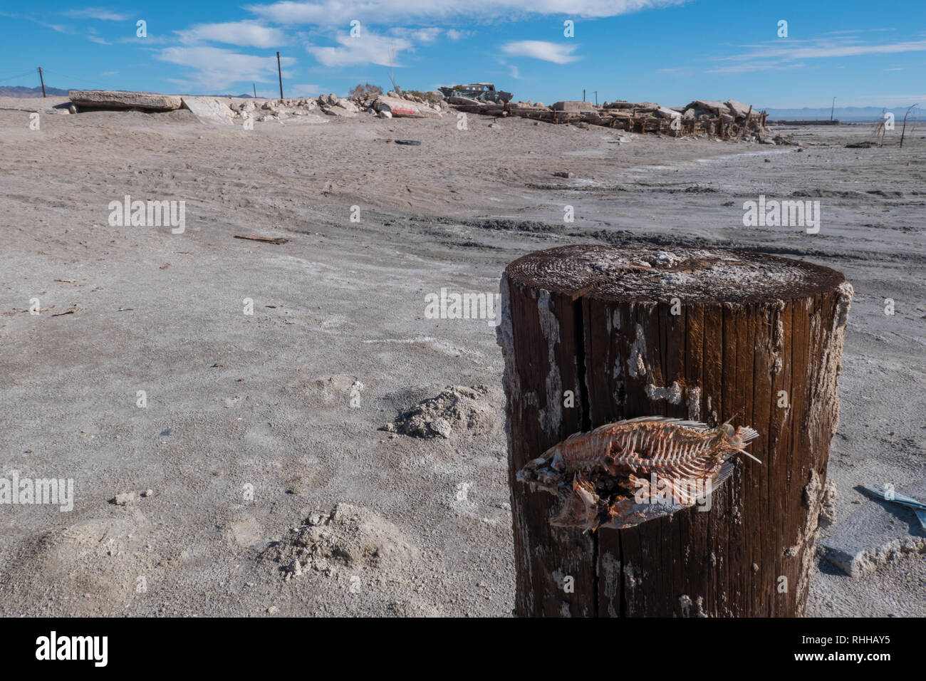 Dead Fish By The Salton Sea Stock Photos & Dead Fish By The Salton