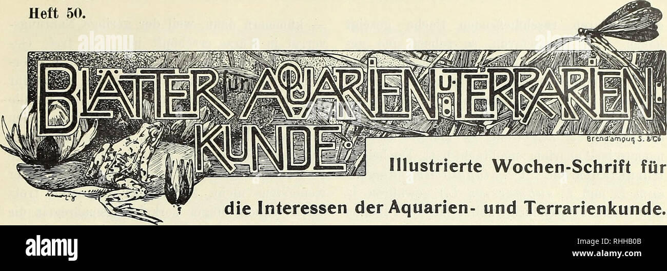 . Blätter für Aquarien- und Terrarien-Kunde. Jahrgang XTIII. Heft 50.. Illustrierte Wochen-Schrift für die Interessen der Aquarien- und Terrarienkunde. Einheimische wintergrüne Aquarienpflanzen. Von J. Oscar Braun.. Please note that these images are extracted from scanned page images that may have been digitally enhanced for readability - coloration and appearance of these illustrations may not perfectly resemble the original work.. Stuttgart - Stock Image