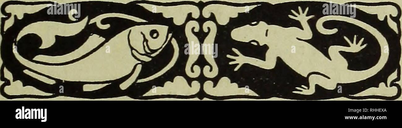 . Blätter für Aquarien- und Terrarien-Kunde. fut flquartetvunfc $o,fro 9 5TtagöeburQ-<rDiü)ctm|kiöt. 2>erlag i>on 3.€<ß CDegnci?*5tuItgaut 9lr. 11 1. 3uni 1916 3m)rg. XXVII (Erfd)eint monatlich 2 mal, am 1. unö 15. Bc3ugsprcls: gMerteliäfjrltdj in ®eutfd)Ianb unb Oeftcrrcid)- Qlngarn 9IH. 1.40; im QtuSlanb 9Itf. 1.75. PoftföecR'Äonto: ötuttgart 5847. n . t5üx öie öretgefaaltene SJktttseile ober öeren Qtaum 20 $3fg. >@rmäf)igungen nad) Qtereinbarung. 1 Qnljalt öiefeS ScftcS: @arl Qlug. QSeitma^er: Rasbora elegans Volz. QHit 1 Qlbbilb. QSolfram <3ungfjang: Mollienisia velifera. Stock Photo