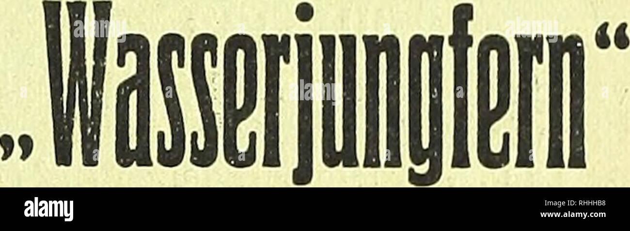 . Blätter für Aquarien- und Terrarien-Kunde. 'S in großer Auswahl ===== offeriert ====== I Julius Mäder ISpez. - Wasserpflanzengärtnerei Sangerhausen i. Thür. 5 Bitte Preisliste verlangen. I zur Kenntnis, daß ich mein Ge- schäft am 1. April 1919 nach Barbis bei Scharzfeld am Harz verlege; bitte alle Zuschriften und Aufträge nach dem 1. April dorthin senden zu wollen. Karl Koch, Zoolog. Handlung, Hannover-Linden, Eleonorenstraße 15. Lieferbar. Kammolch Triton cristatus Bergmoch Triton alpestris Fadenmolch Triton palmatus Teichmoch Triton vulgaris Blindschleiche Anguis fragilis Bergeidechse Lace Stock Photo