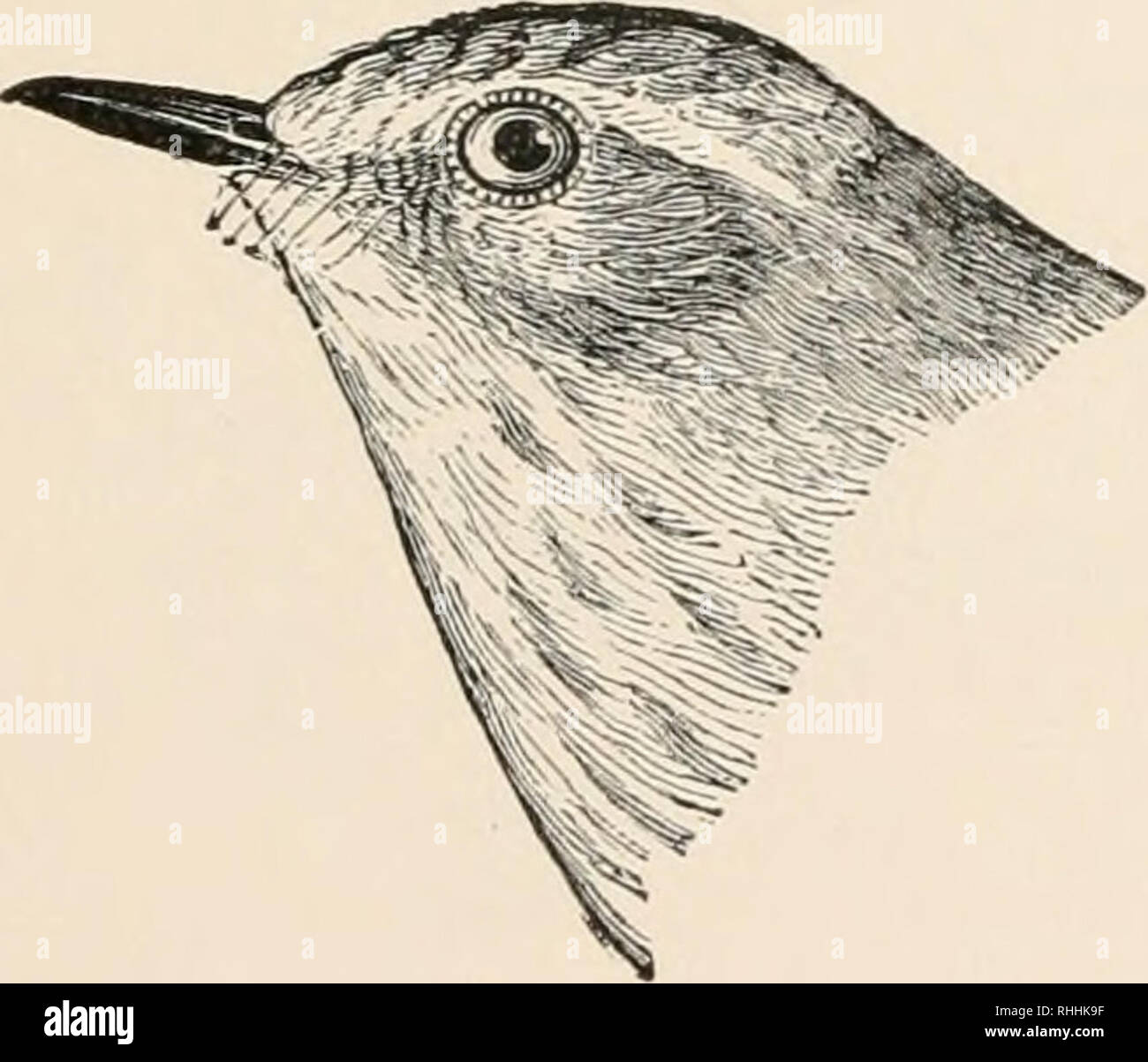 The birds of eastern North America : known to occur east of the