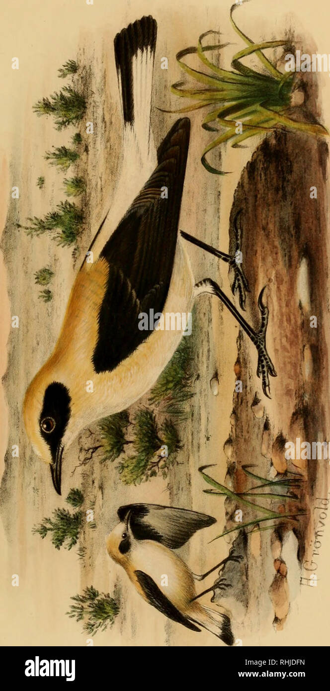 . The birds of Tunisia; being a history of the birds found in the regency of Tunis. Birds. < 5 H o CO H. o u cti. Please note that these images are extracted from scanned page images that may have been digitally enhanced for readability - coloration and appearance of these illustrations may not perfectly resemble the original work.. Whitaker, Joseph Isaac Spadafora, 1850-. London, R. H. Porter - Stock Image