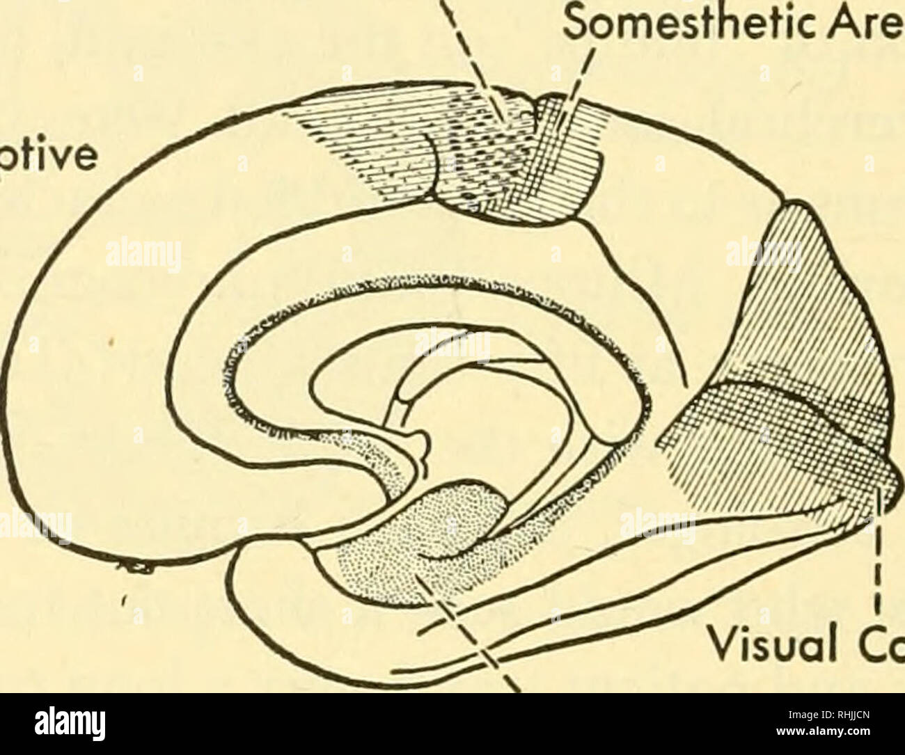 Biology Of The Vertebrates A Comparative Study Of Man And His