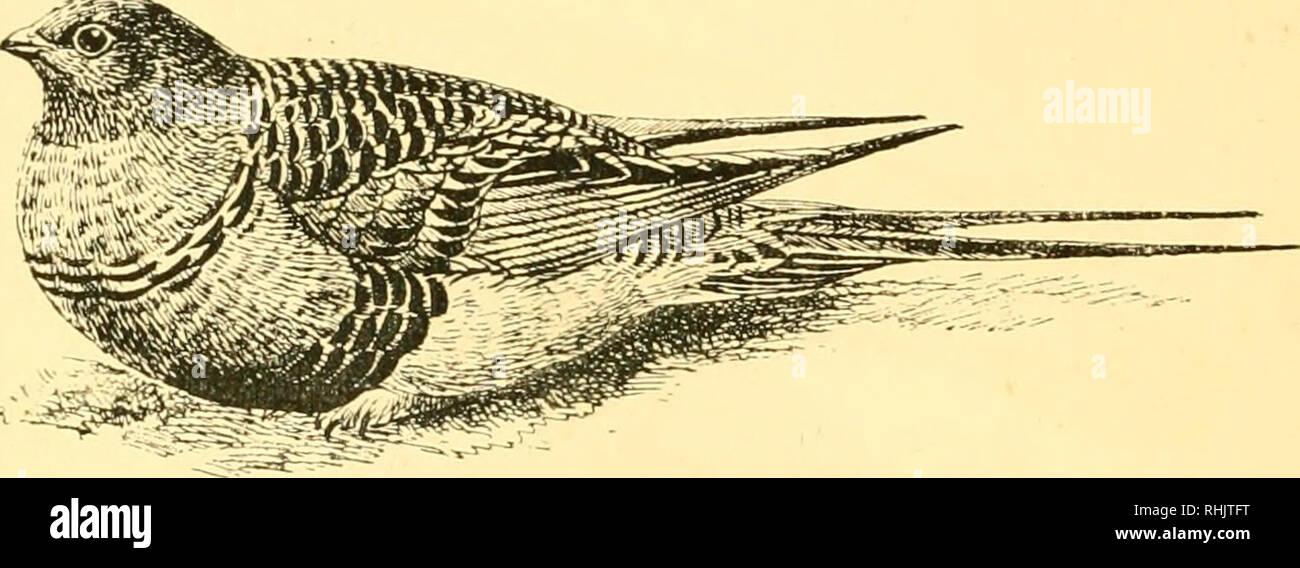 Birds: the elements of ornithology