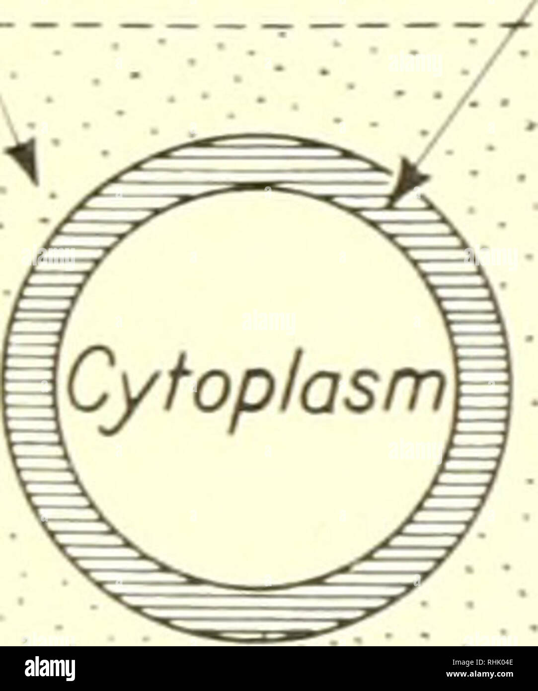Biophysical Science Biophysics 113 The Absorption Of