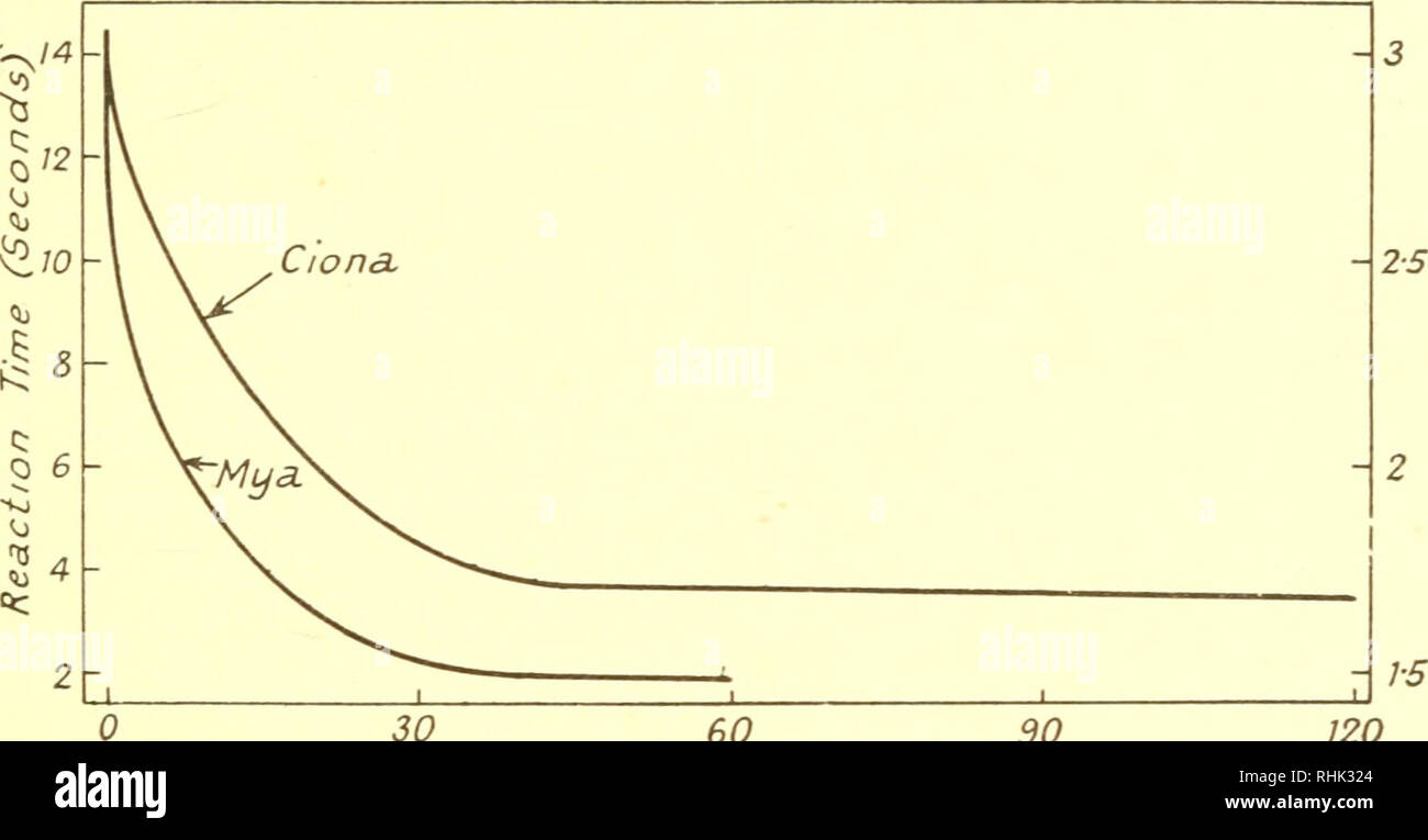 action potential duration 90