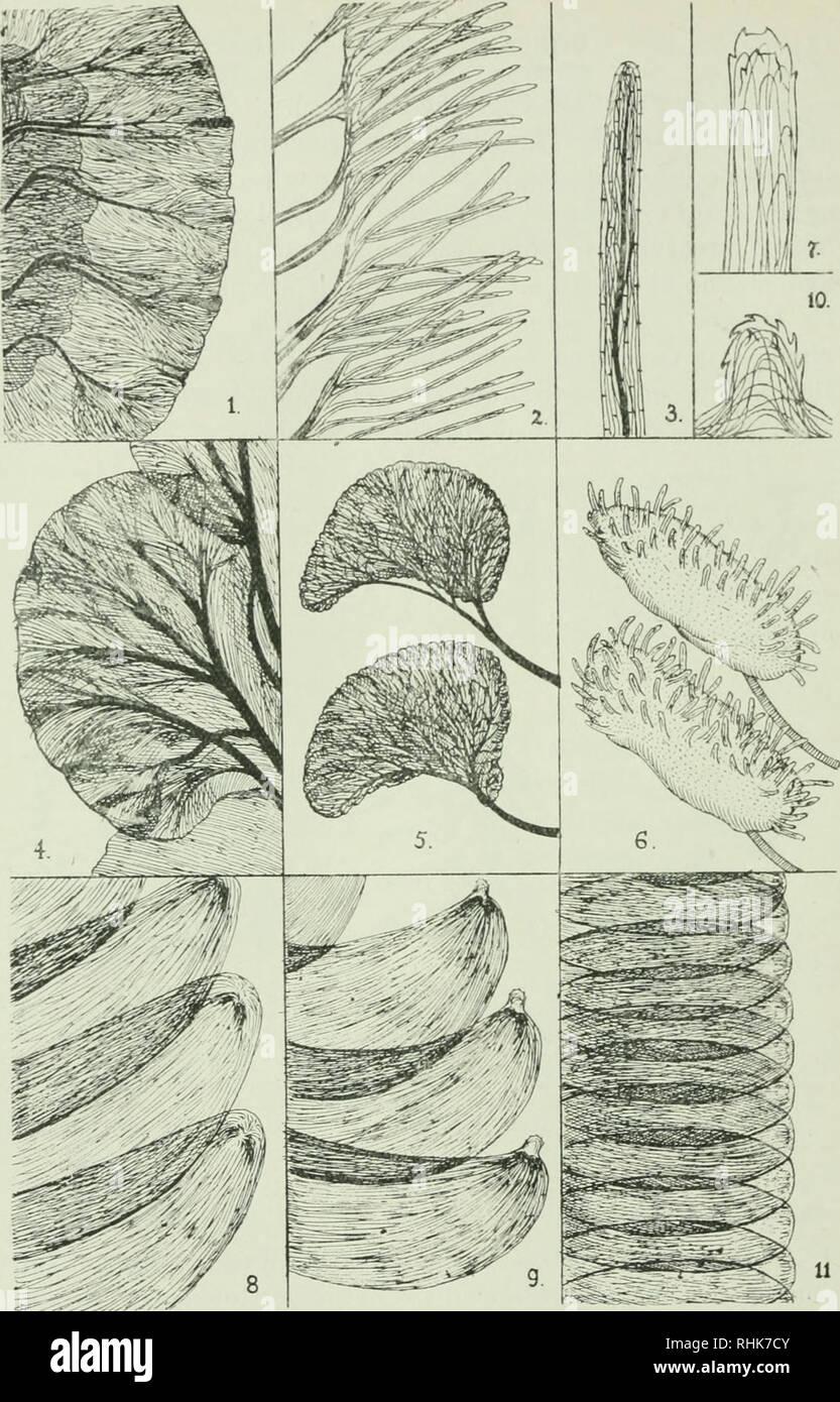 The biology of dragonflies (Odonata or Paraneuroptera