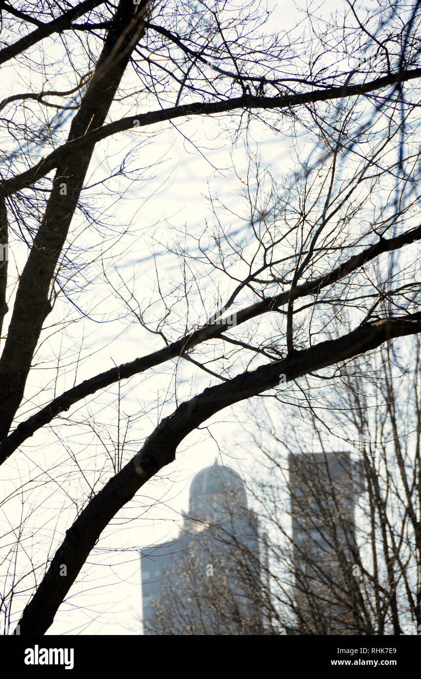 A New York City winter cityscape as seen through the leafless hibernating trees of Central Park. - Stock Image