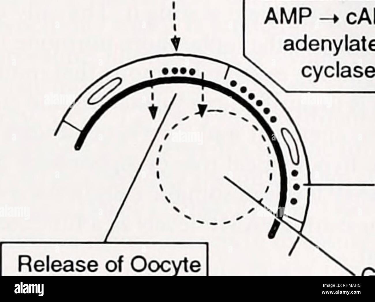 wiring diagram rheem xe10p06pu20uo amp diagram biology main giant rundumpodcast de  amp diagram biology main giant