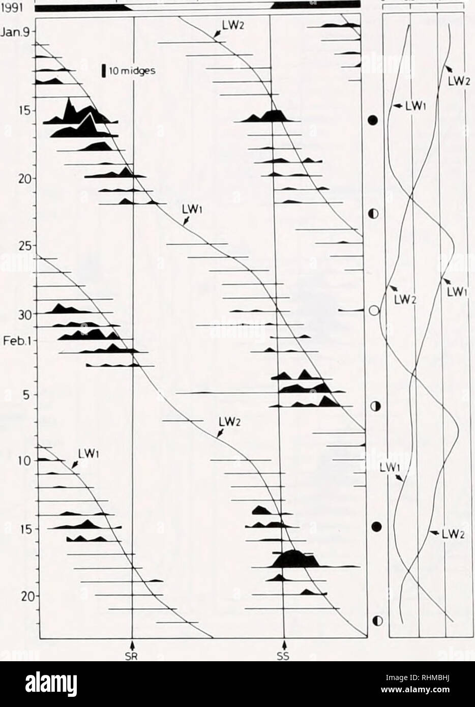. The Biological bulletin. Biology; Zoology; Biology; Marine Biology. 21, Time of day 0 18 Tide height (m) 0 05 10 15. Figure 4. Daily timing of emergence of Clunio tsushimensis males in relation to day-night, tidal, and lunar cycles. (Left) The record from 28 October to 25 November 1990. Midges were collected using a light trap method. The number of midges is plotted vertically on the horizontal lines, which also show the 5-min period every 30 min (dot) during which sampling was done. Absence of the horizontal bars indicates no sampling. 55 and SR represent the times of sunset and sunrise, re - Stock Image