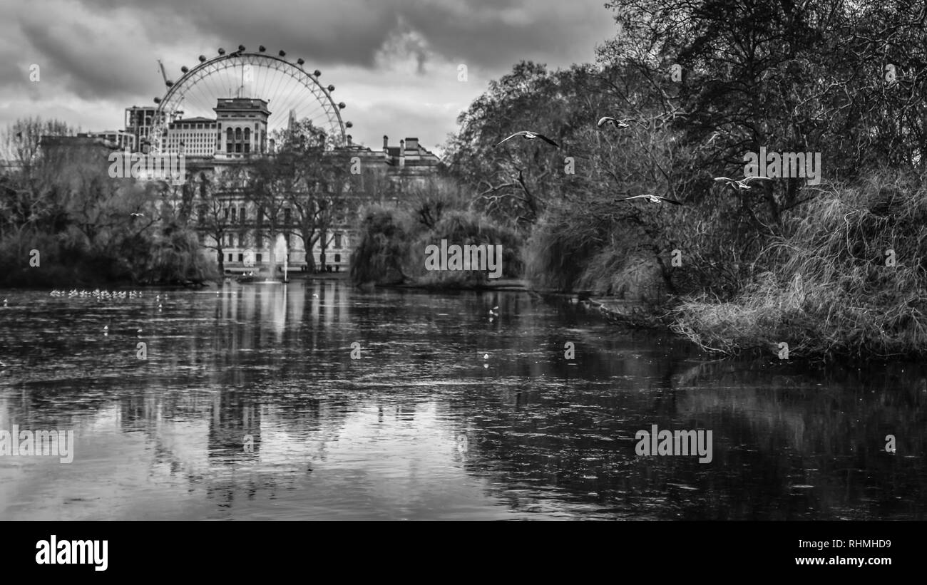 The view in black and white from St. James' Park with  the famous London Eye in the background. - Stock Image