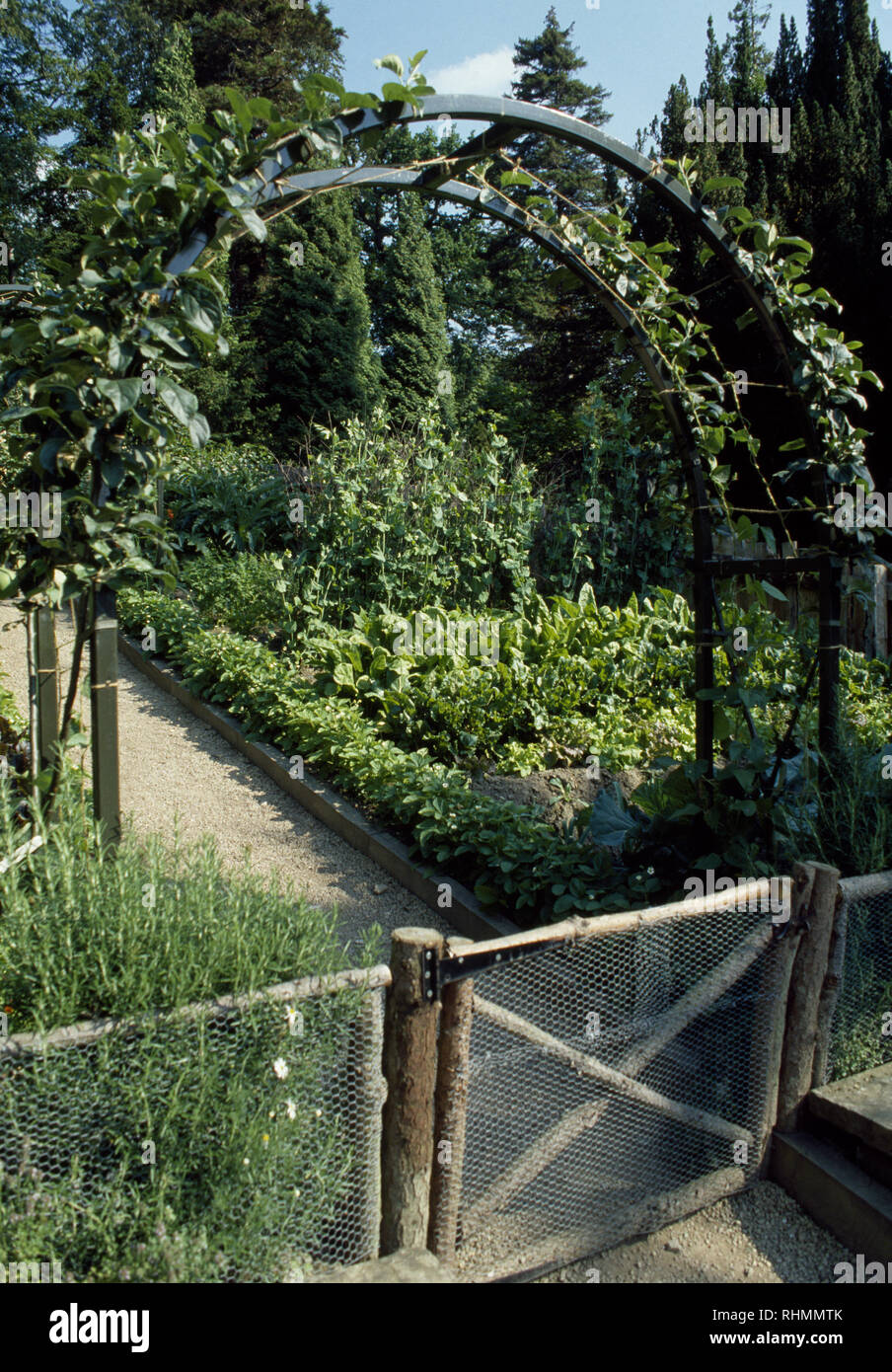 Cordon Fruit Trees On Metal Arches In Large Vegetable Garden Stock
