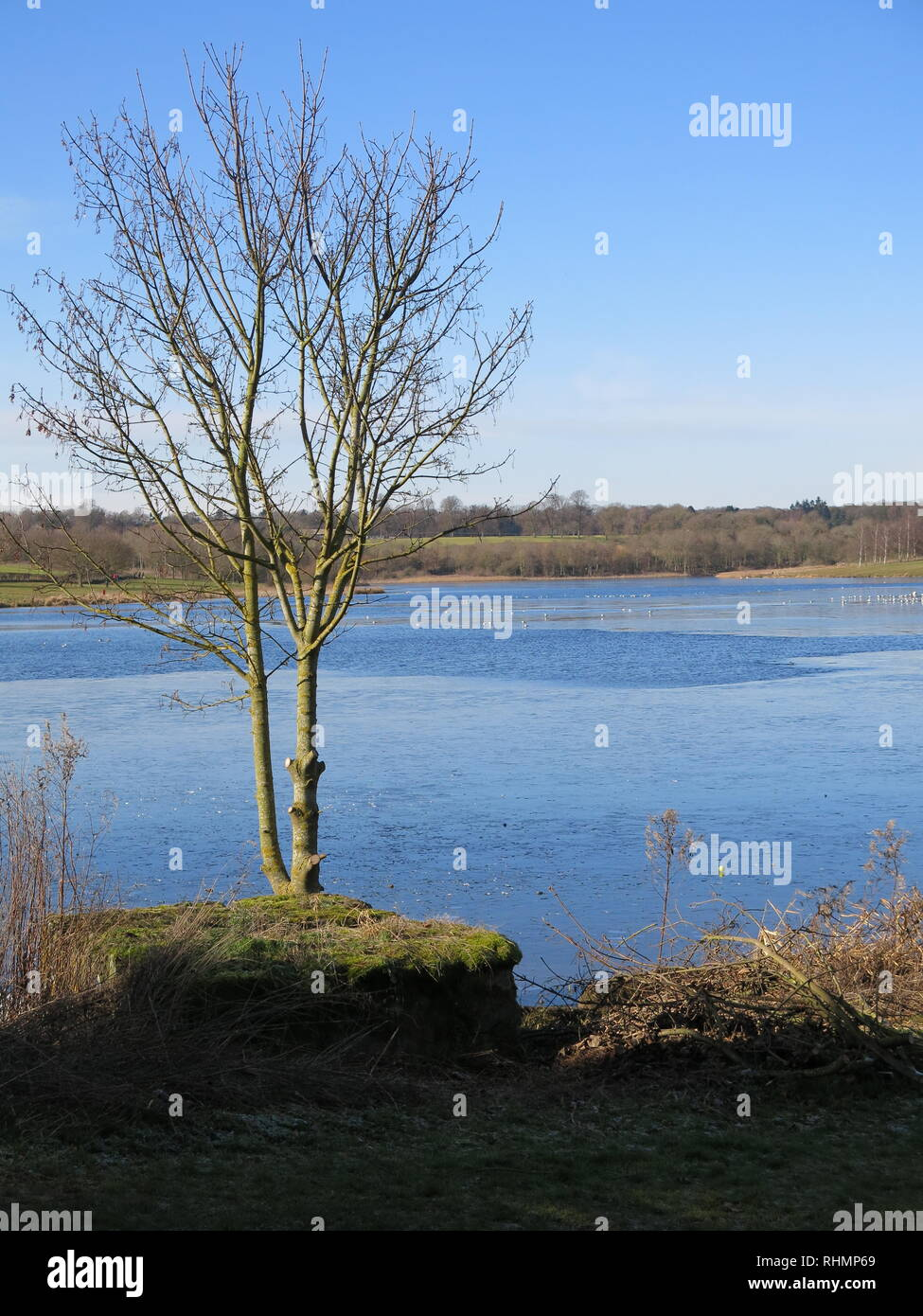 A wintry scene at the reservoir, partly frozen in early February; Sywell Country Park, Northamptonshire - Stock Image